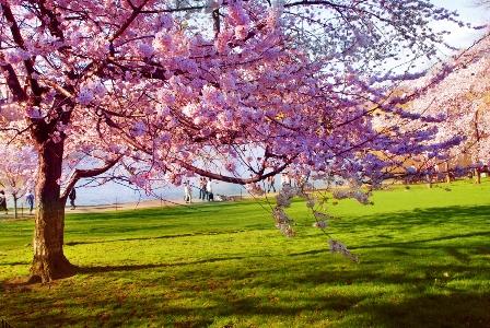 الربيع الطبيعية والانسانية