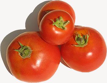 الطماطم, الطماطم جراثيم العالقة بالجسم