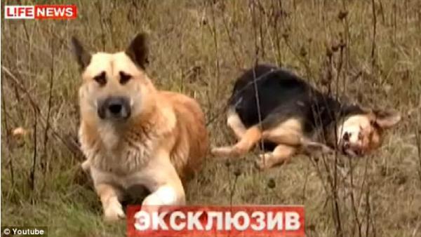 كلب يحرس جثة رفيقته لمدة أسبوع رافضاً دفنها
