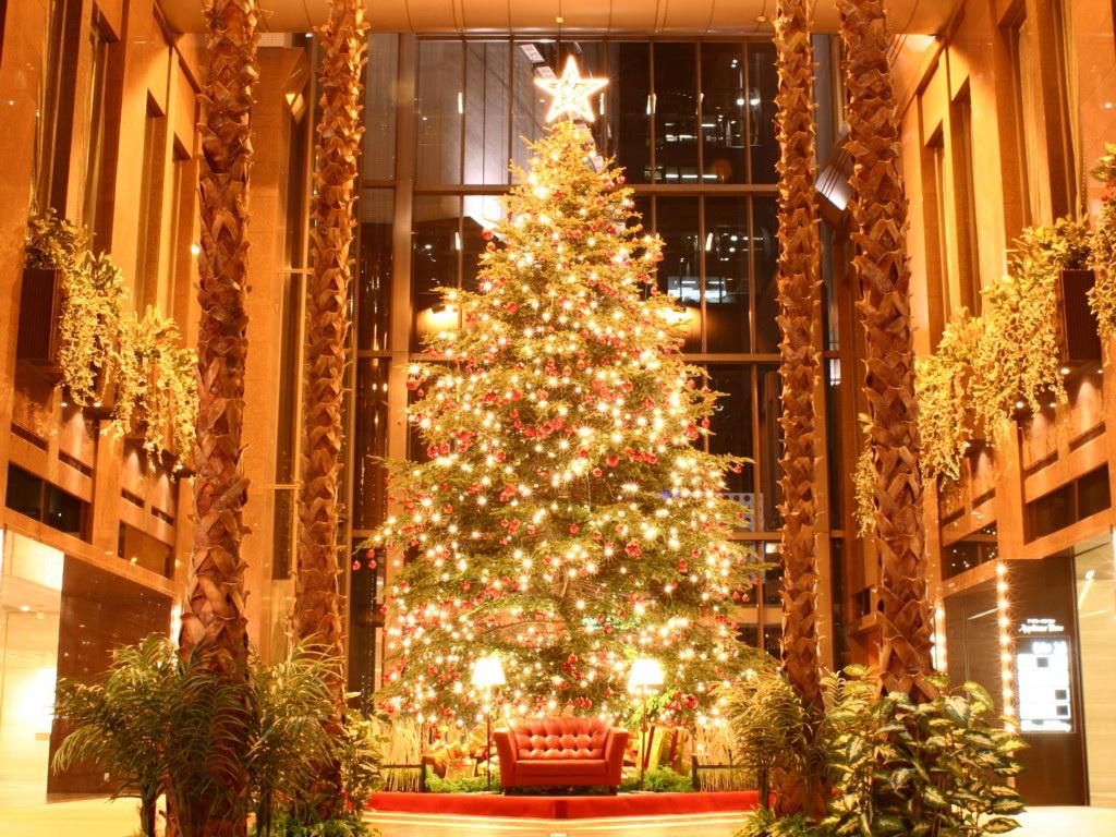 اشجار الميلاد Photo Christmas trees 2013