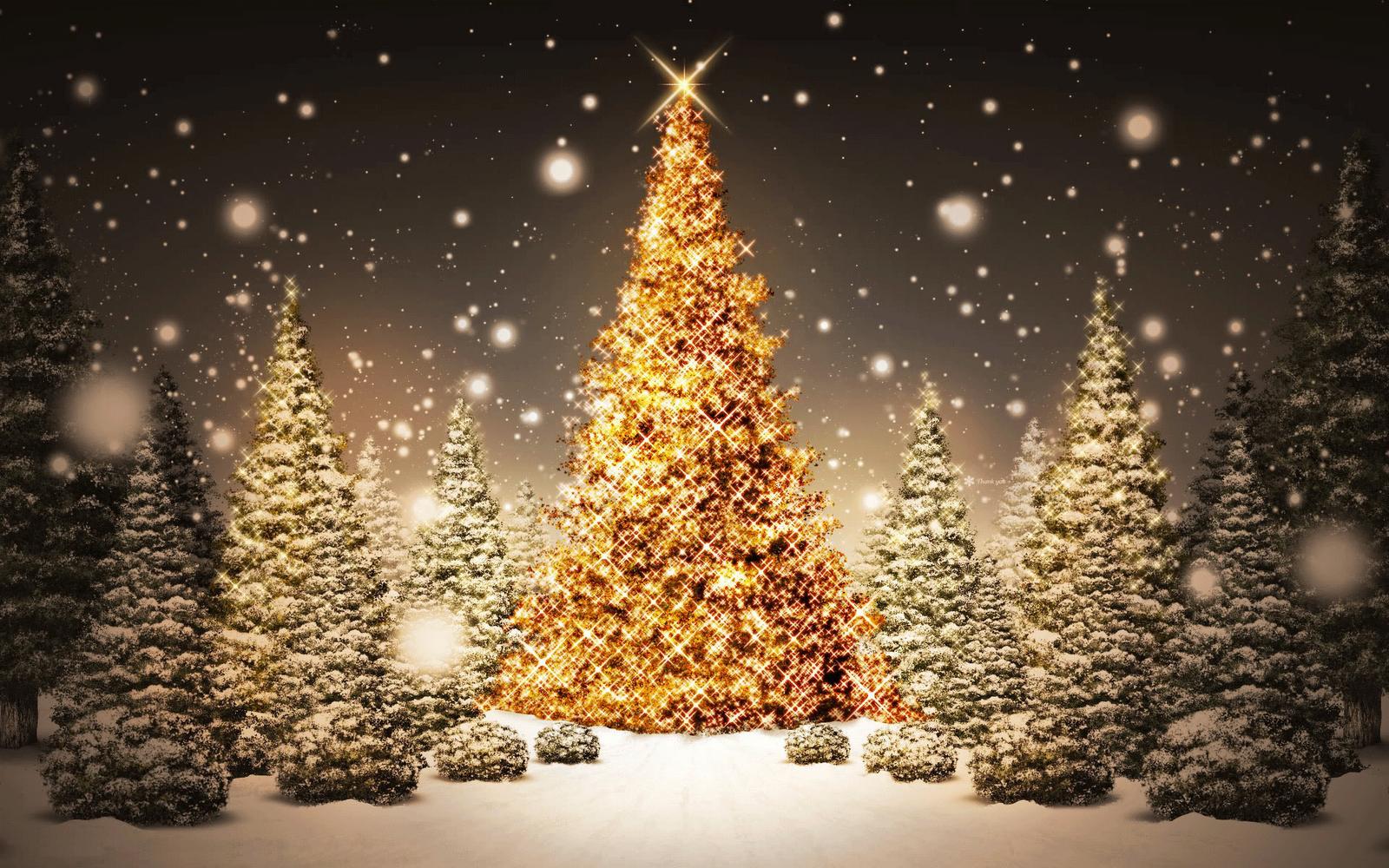 اشجار الكريسمس 2013 الميلاد2013