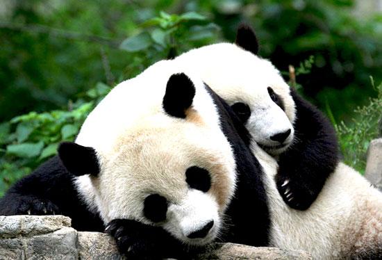 عاطفة الحيوانات مليئة بالرومانسية والدفئ عاطفة الحيوان مليئة بالصدق