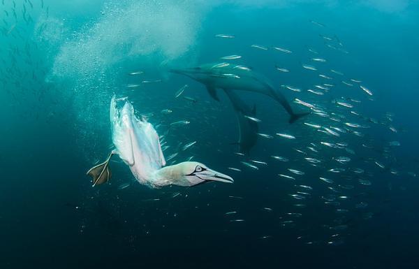 لروائع البحار بعدسة المصور ألكساندر سافونوف