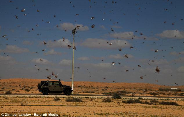 بالصور اسرائيل بتدمير محاصيلهم الزراعية