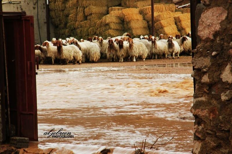 صور سيول محيرقة والخنقة شمال غرب القويعية