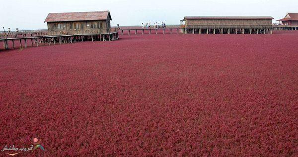الورود الصين