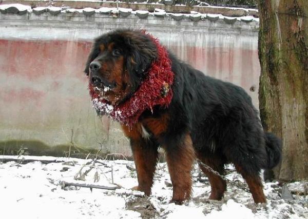 صور كلاب بوليسية صور كلاب شرسه صور كلاب