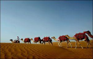 صحراء يحضرها العالم وتقارير الصحراء الاغنياء العالم