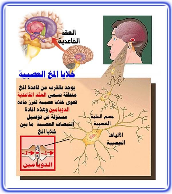 الرعاش العصبي مفهوم الرعاش العصبي